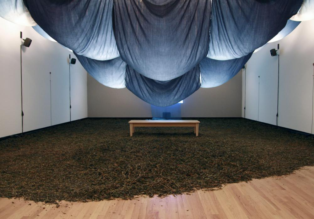 Fields of Indigo, installation at Krannert Art Museum, 2012.