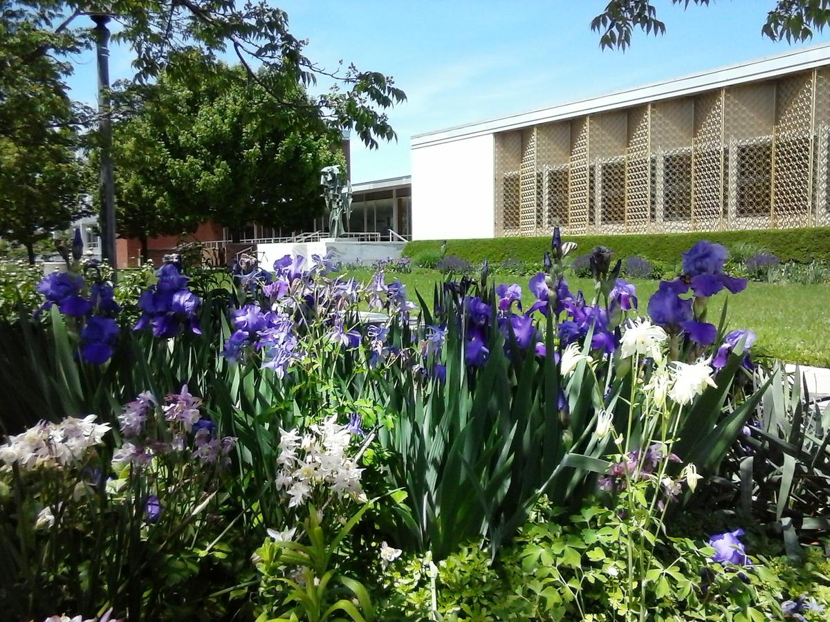 Krannert Art Museum Gelvin Gardens with Irises in foreground
