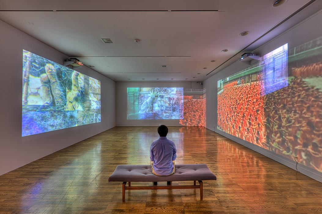 Carolee Schneemann: Within and Beyond the Premises, installation at Krannert Art Museum, 2012. Photo by Chris Brown